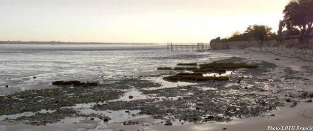 Plage de Port-des-Barques (17)