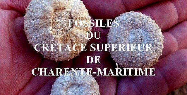 Fossiles du Crétacé supérieur de Charente-Maritime